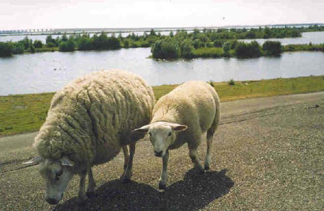 Buitendijk Oude-Tonge bij Camping De Krammer